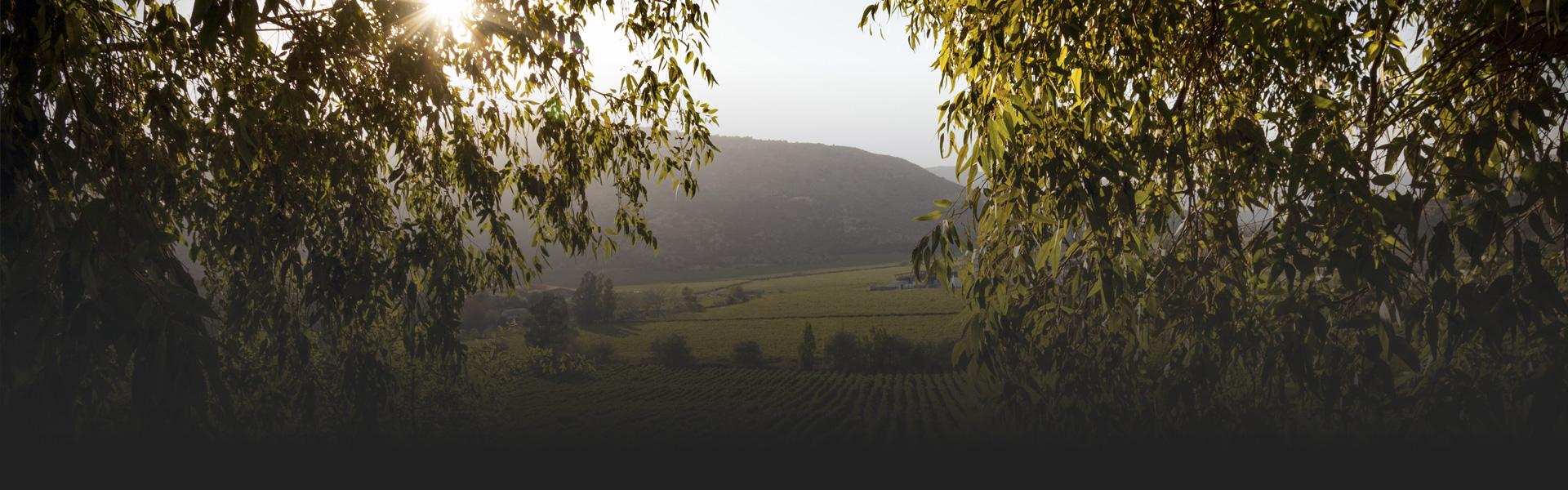 Ranco Wines - Contacto